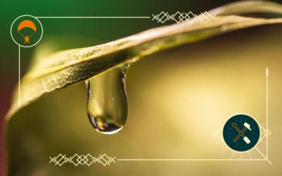 Wasseraufbereitung in der Natur – so funktioniert's